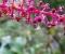 Flores | Flores - Azores (PT)