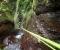 Bûcherons | Madeira (PT)