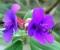 Flores | Madeira (PT)