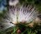 Flores | Iporanga. Brasil